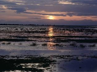 Doñana. Fuente: Magrama.