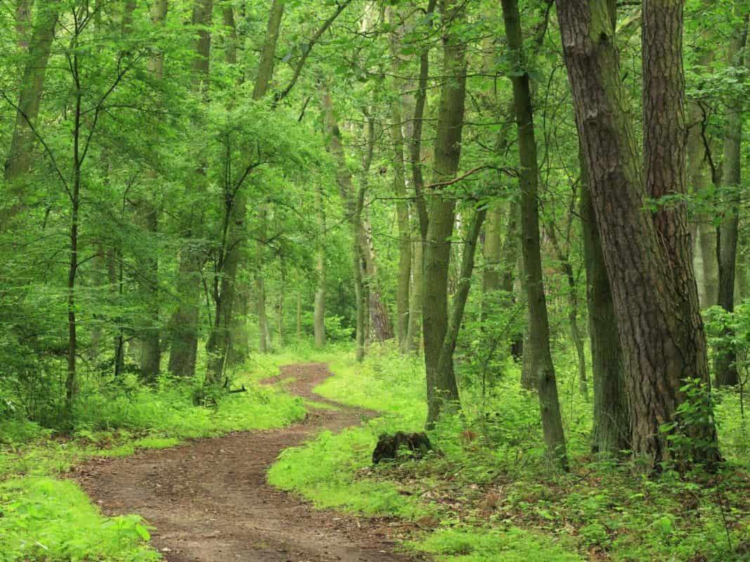 Prevención mediante el uso de Drones de la tala ilegal en selvas tropicales y bosques
