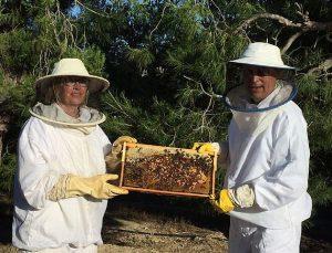 Muchos factores amenazan la supervivencia de las abejas.