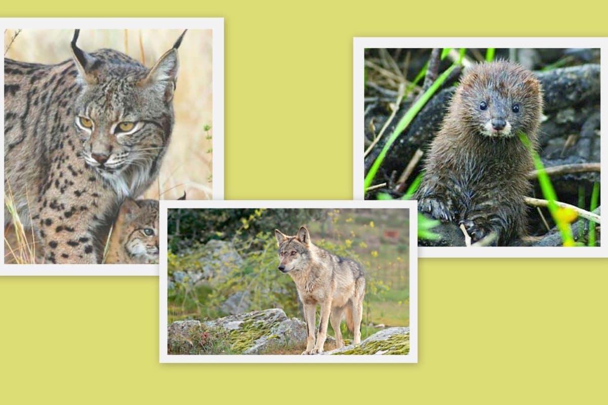 Fauna de vertebrados previsiones para evitar su contracción.