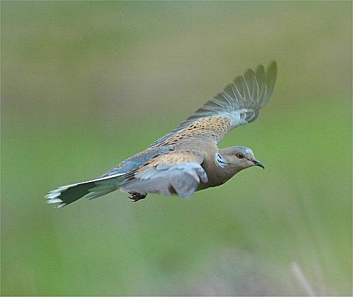 Fuente: www.animalesextincion.es