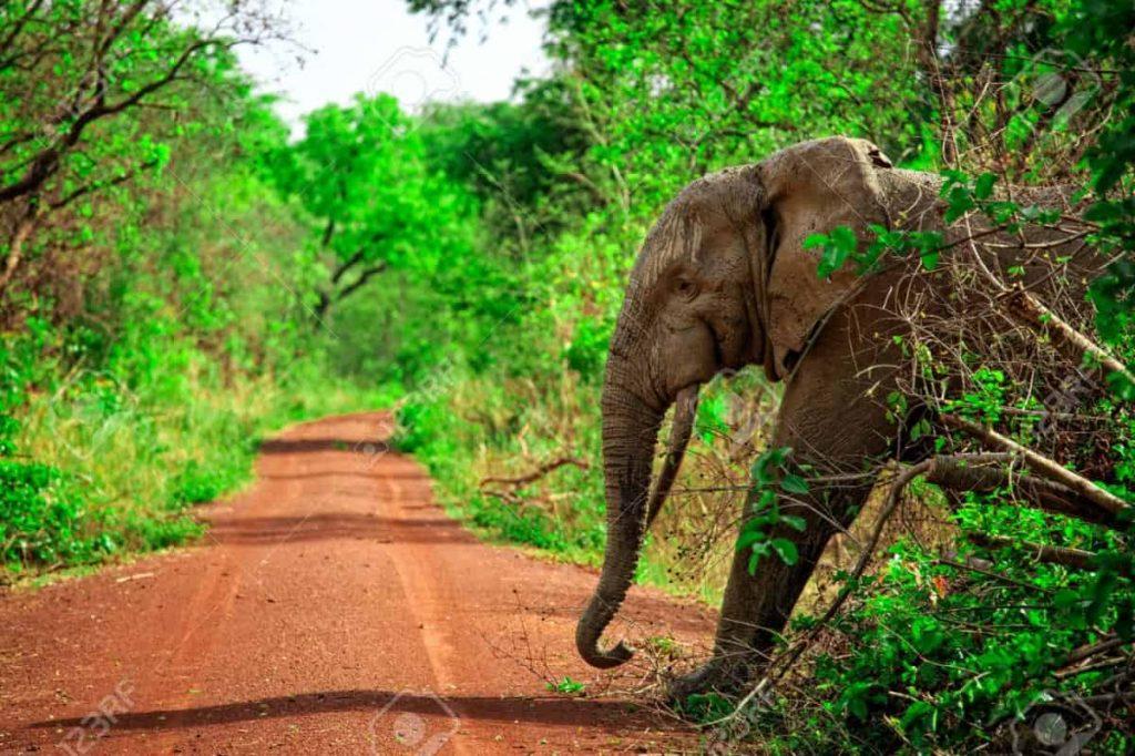 África: biodiversidad en peligro