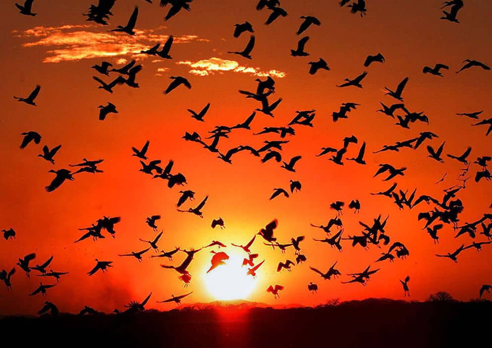 Aves migratorias se celebra su día el 10 de mayo de 2017