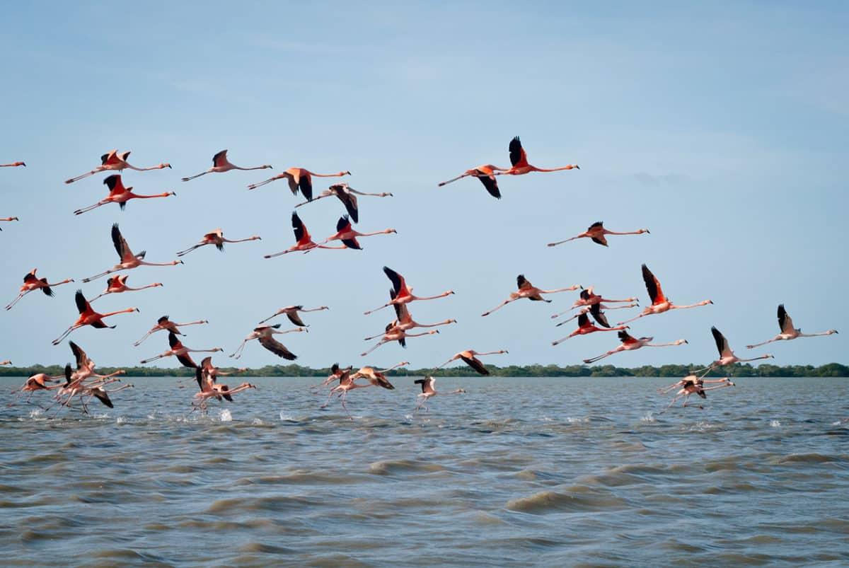 Dia Mundial de las Aves Migratorias