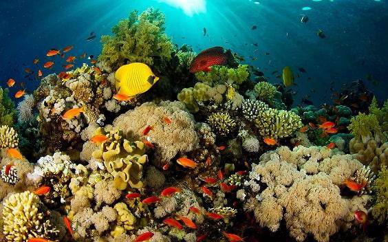 Fuente: www.educacioncontracorriente.org