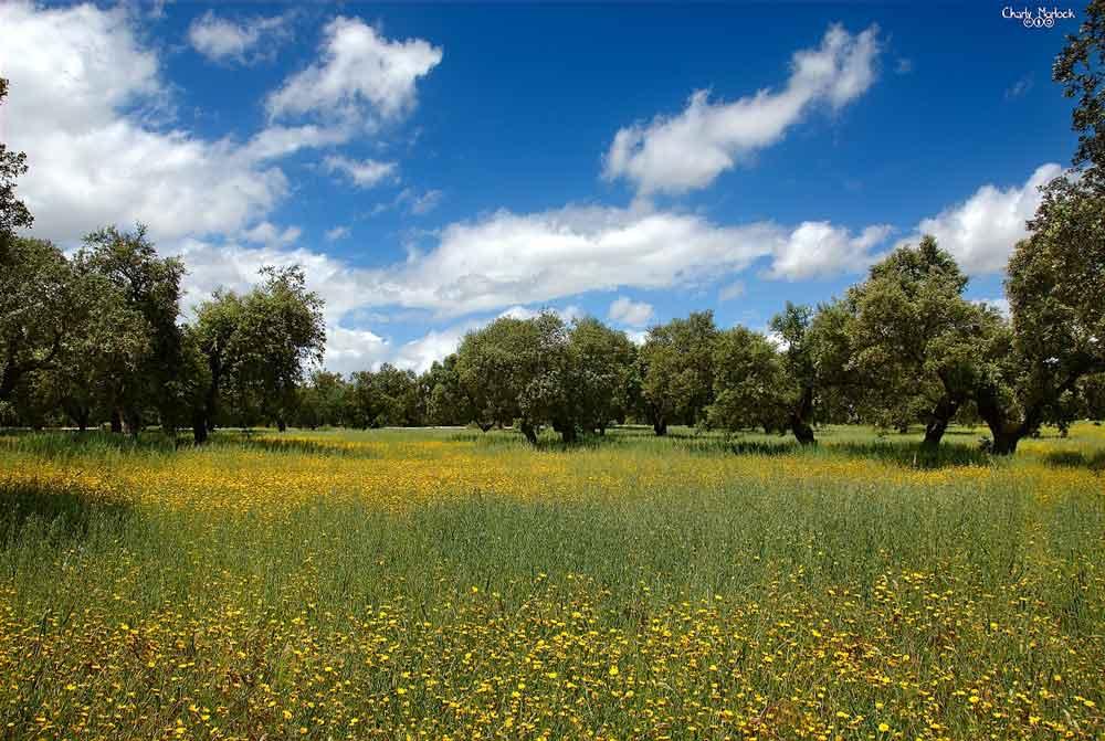 Dehesas españolas: ¿Cómo mantener la biomasa adecuada?