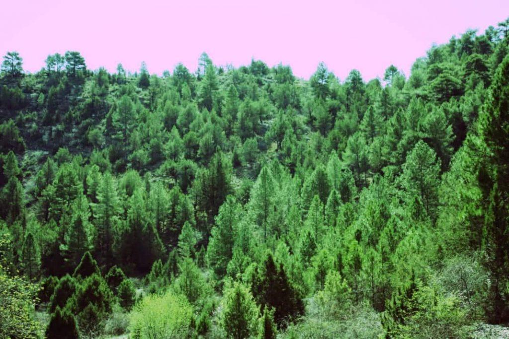 Bosques: gestión forestal sostenible