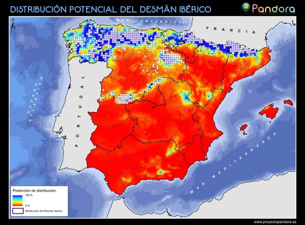 Distribución Potencial Desman Ibérico. Pandora.