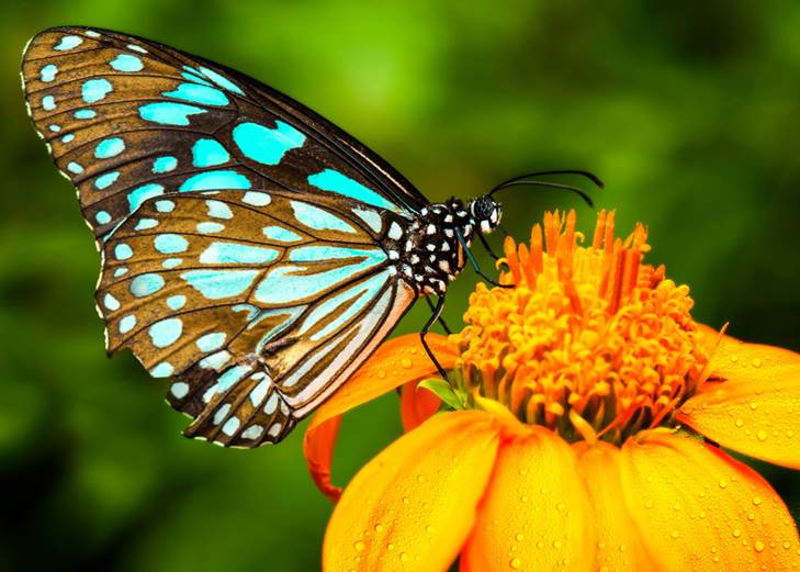 Estado real de la situación de las mariposas.