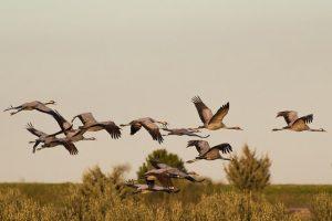 Avefy es una aplicación para identificar aves de la península ibérica