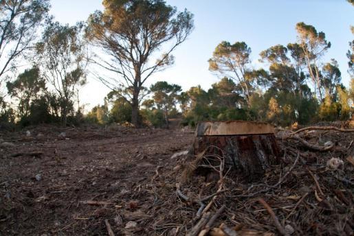 Consecuencias de la extracción de biomasa forestal