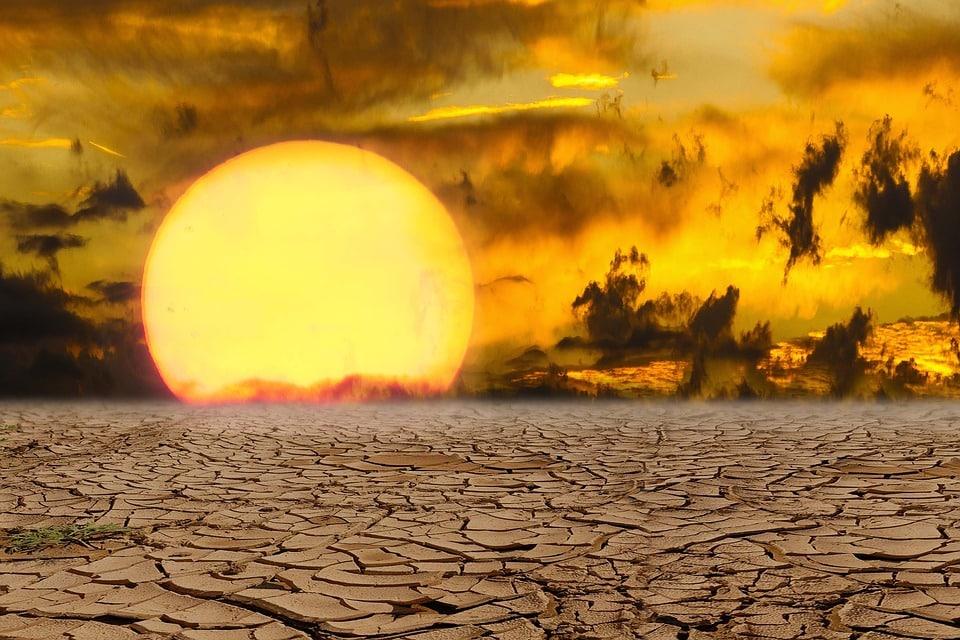 Cambio climático y su afección a la biodiversidad: qué dicen los estudios