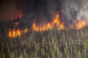 El cambio climático contribuye a los incendios forestales