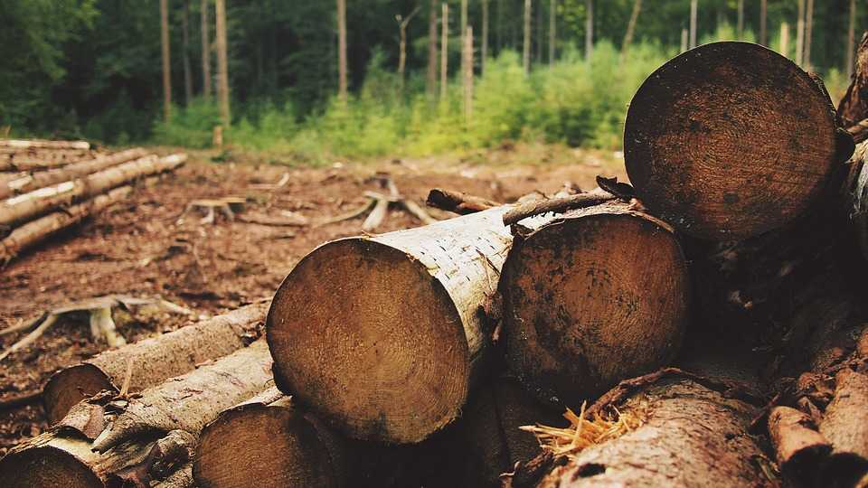 Productos maderables y no maderables pueden ser certificados