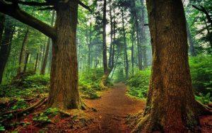 La certificación forestal es posible bajo una correcta gestión de los bosques