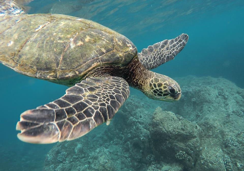 Los ambientes marinos son muy biodiversos y nos otorgan servicios ambientales fundamentales para la vida
