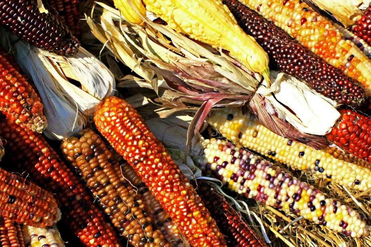 El Día de la Diversidad Biológica en 2019 busca poner en valor la biodiversidad en los alimentos