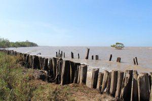 Surinam tiene una economía de carbono negativa