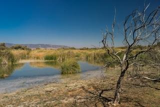 Gran parte del metano está asociado a humedales de agua dulce