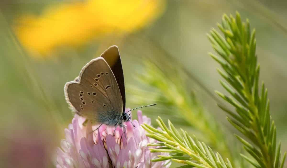 La Estrategia de Biodiversidad para 2020 tiene una visión a 2050