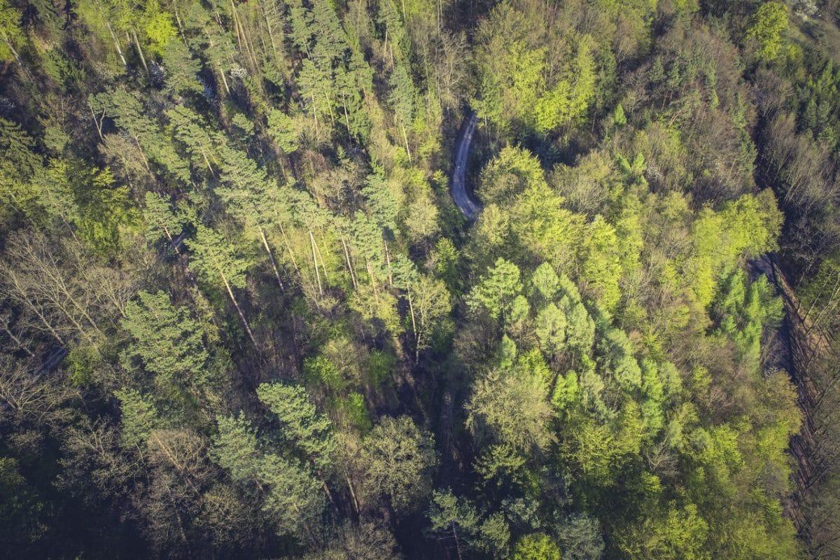 La gestión forestal es fundamental para hacer frente al cambio climático