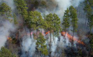 La gestión de incendio forestales puede prevenir el daño de grandes áreas en el sur de Europa