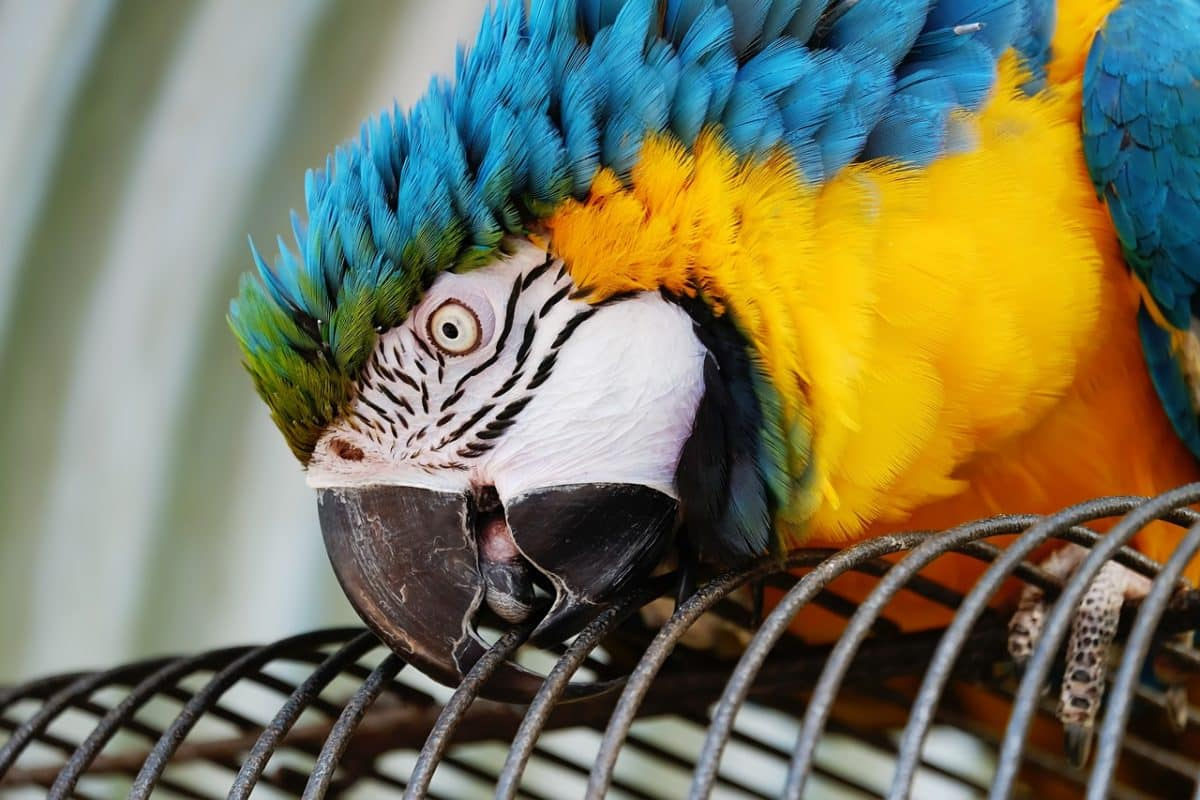El tráfico ilegal de especies es una gran amenaza a la biodiversidad