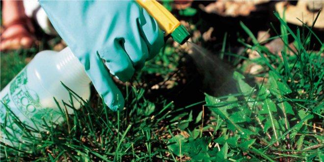 Herbicidas que se utilizan para sacar malas hierbas
