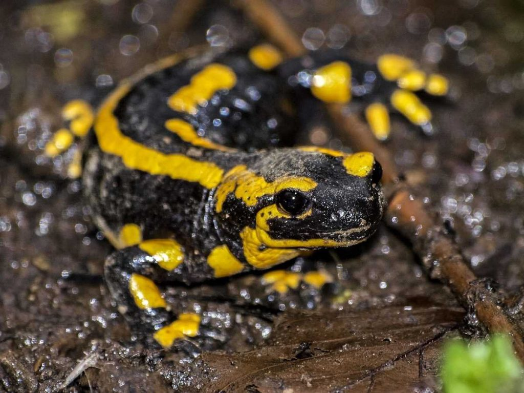 El Inventario Nacional de Fauna integra detalle sobre las diferentes especies presentes y su situación de conservación