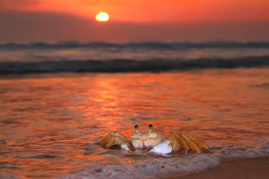 Menos oxígeno en los mares, menos biodiversidad. Esa es la conclusión a la que han llegado científicos y se ha publicado en la revista Science