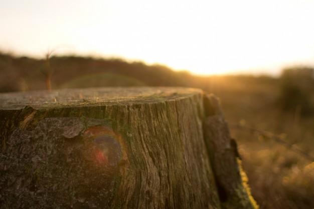 Deforestación de los bosques, uno de los factores de la pérdida de biodiversidad