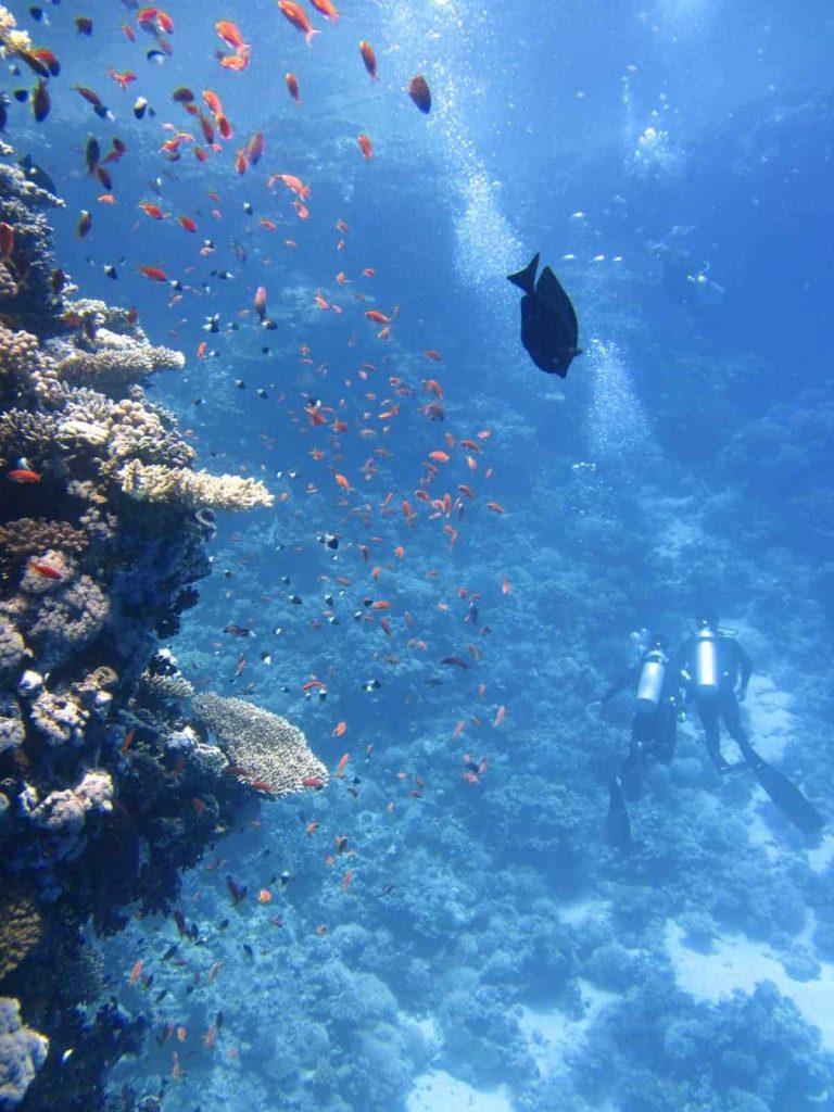 Los corales se ven impactados por los efectos del protector solar