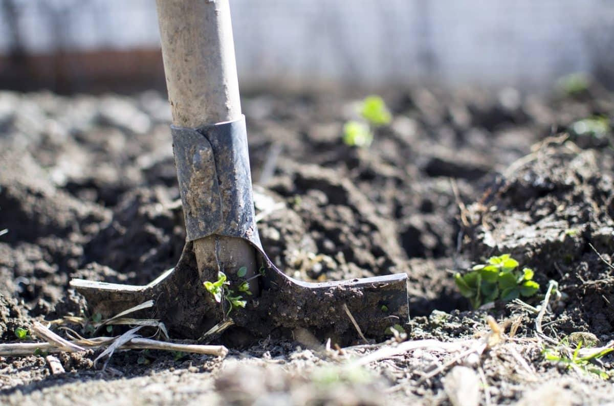 Reducción de la deforestación y captura de carbono en el suelo, dos opciones para mitigar el cambio climático