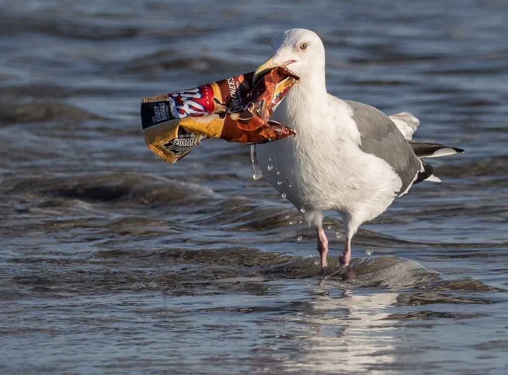 La basura afecta a la biodiversidad asociada al mar
