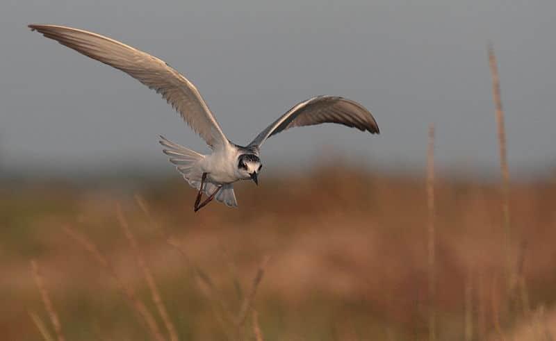 En la Reserva se emprenden acciones de restauración ambiental para favorecer sitios de nidificación y resguardo de aves.