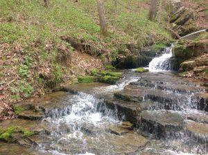 El ambiente nos brinda bienes y servicios ecosistémicos que permiten nuestro desarrollo