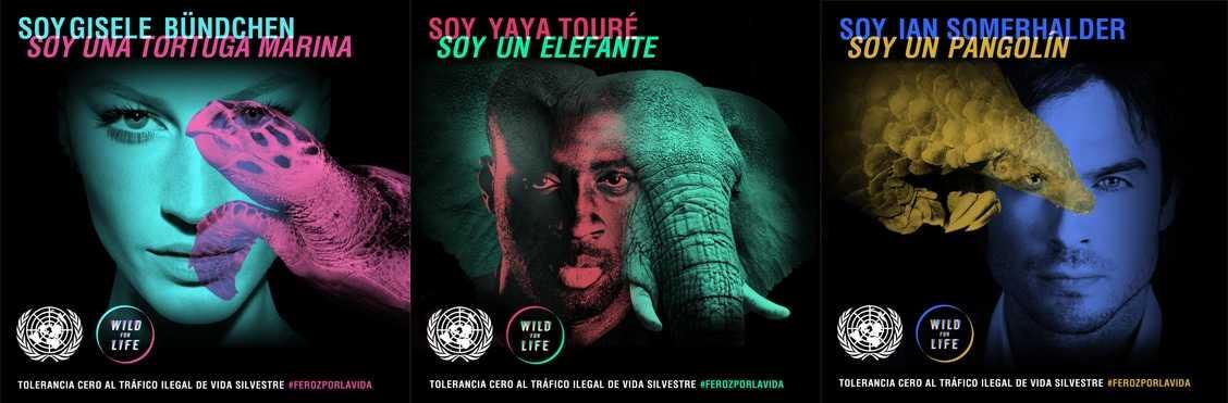 #FerozporlaVida es la última campaña masiva para alertar sobre el tráfico ilegal de vida silvestre
