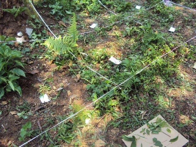 muestreo de vegetación